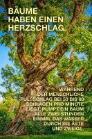 Bäume haben eine Herzschlag - GoodNews