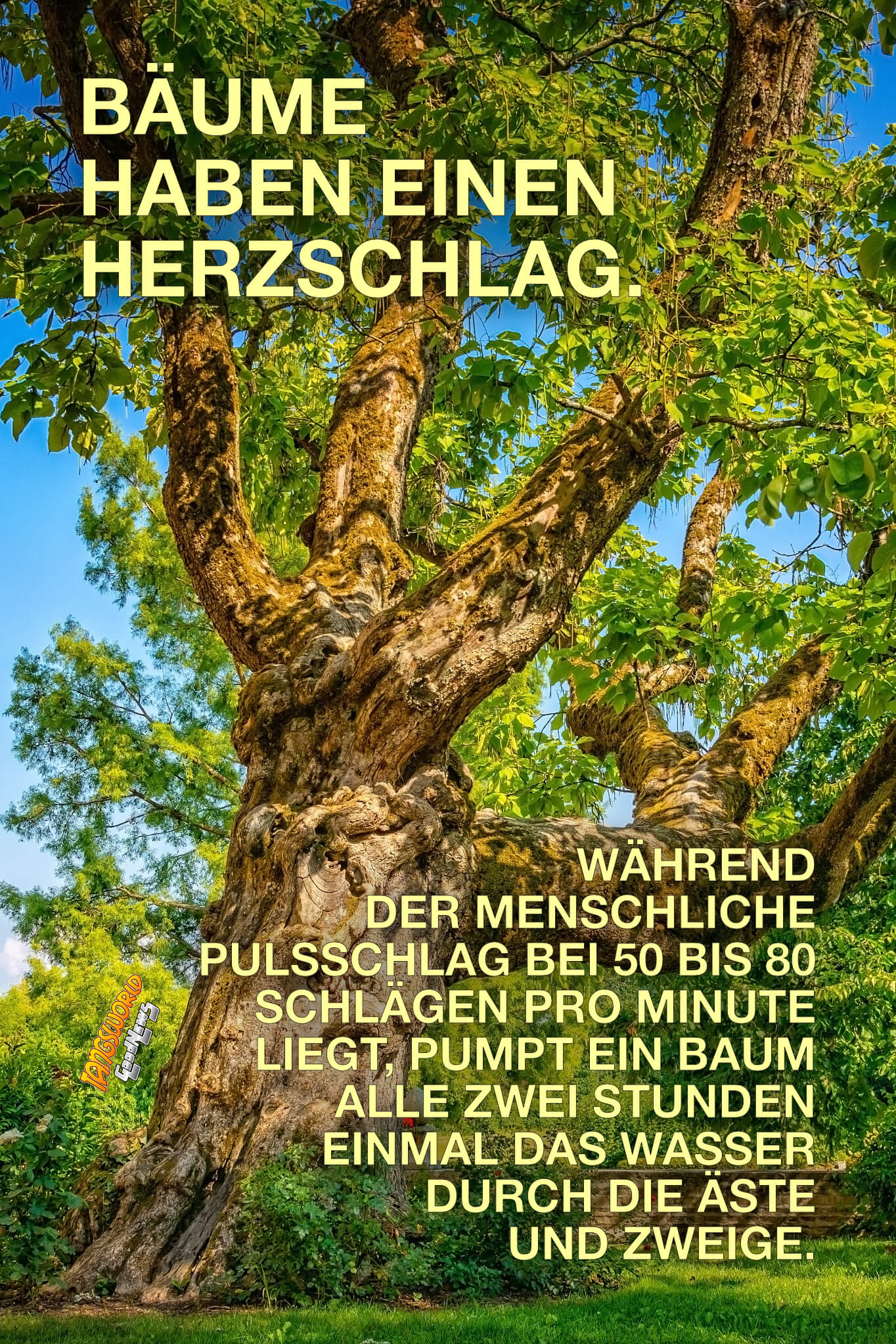 Bäume haben einen Herzschlag. Während der menschliche Pulsschlag bei 50 bis 80 Schlägen pro Minute liegt, pumpt ein Baum alle zwei Stunden einmal das Wasser durch die Äste und Zweige. - GoodNews