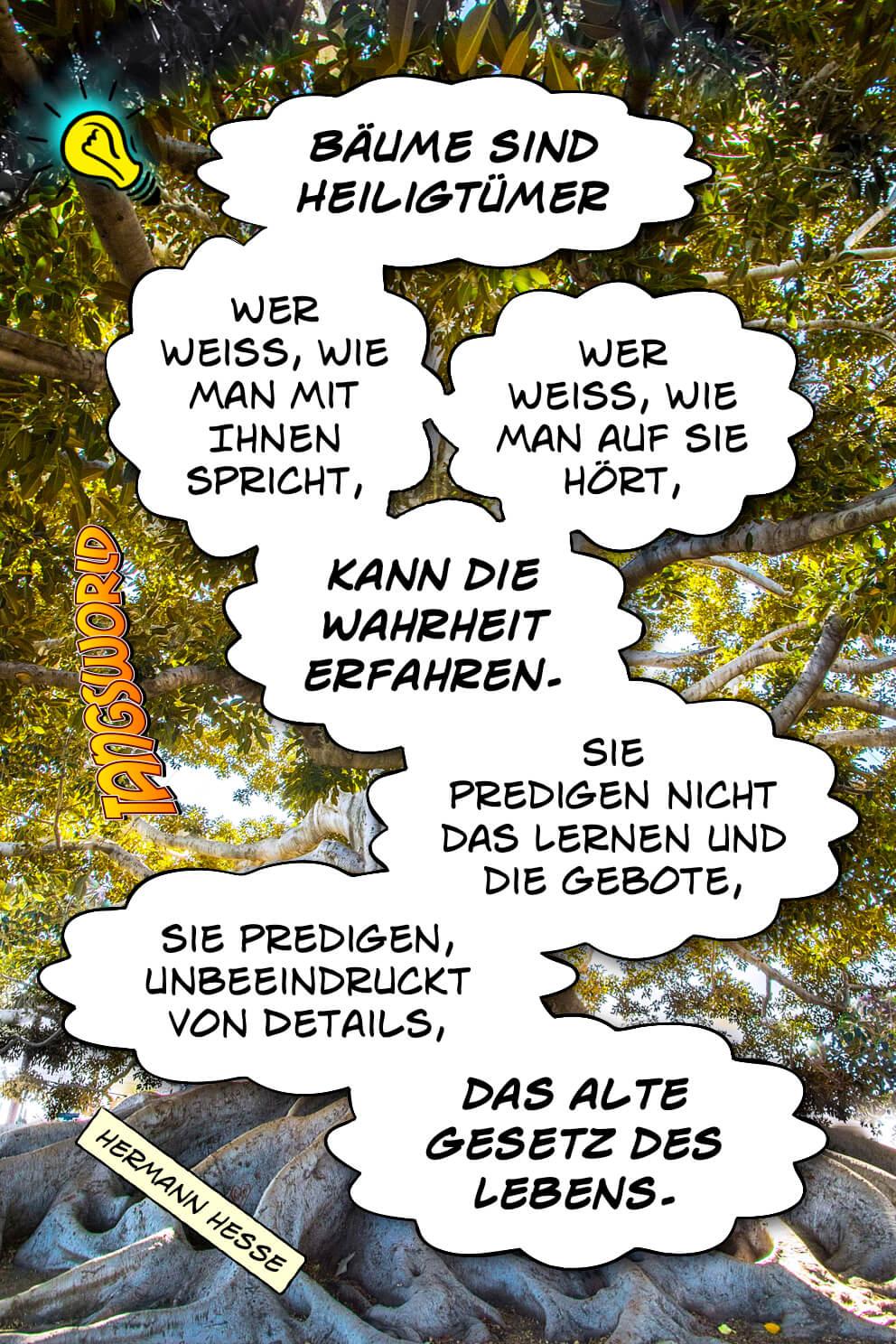 Bäume sind Heiligtümer. Wer weiß, wie man mit Ihnen spricht, wer weiß, wie man auf sie hört, kann die Wahrheit erfahren. Sie predigen nicht das Lernen und die Gebote, sie predigen, unbeeindruckt von Details, das alte Gesetz des Lebens. - Geistesblitze   Hermann Hesse