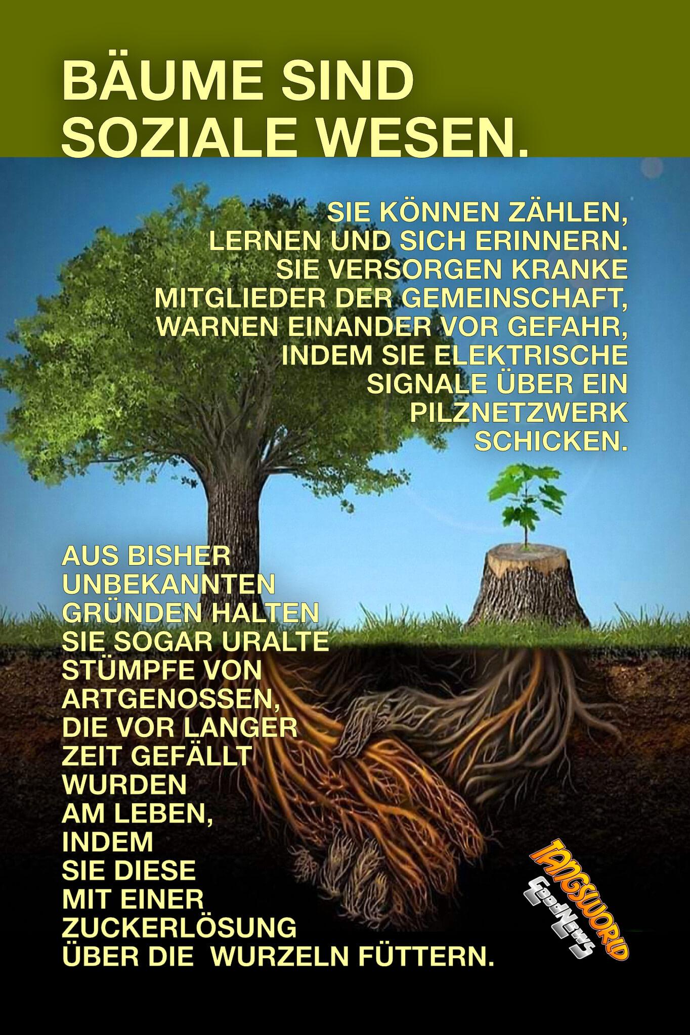 Bäume sind besondere Wesen. Sie teilen ihre Nahrung mit Artgenossen und päppeln sogar ihre Konkurrenz hoch. Die Gründe sind dieselben wie bei menschlichen Gesellschaften: Gemeinsam geht es viel besser. - GoodNews