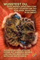Wusstest du, dass Bienen zwischen fünf und acht Stunden am Tag schlafen, manchmal in Blumen? - GoodNews