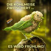 Die Kohlmeise zwitschert … Es wird Frühling! - Geistes(bl)witze