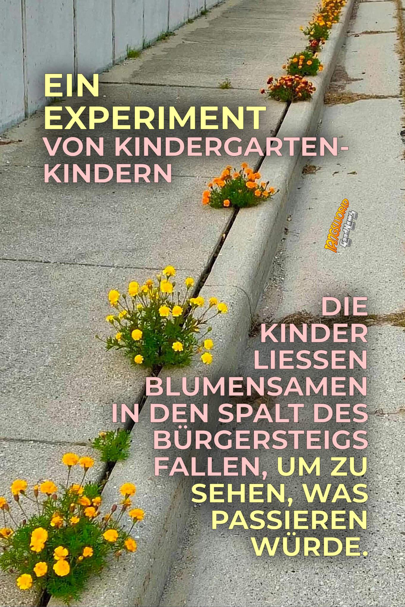 Ein Experiment von Kindergartenkindern. Die Kinder ließen Blumensamen in den Spalt des Bürgersteigs fallen, um zu sehen, was passieren würde. - GoodNews