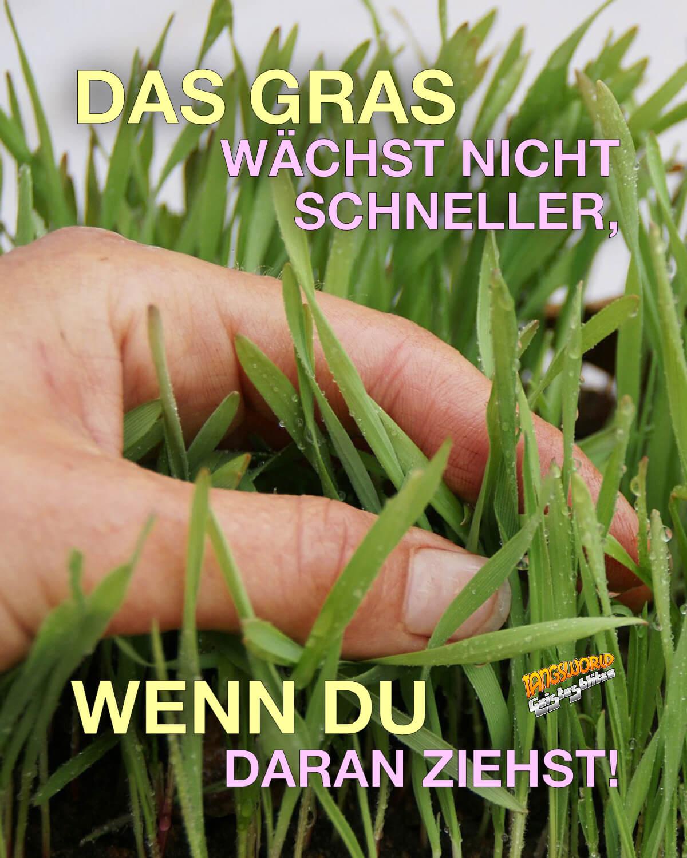 Das Gras wächst nicht schneller, wenn du daran ziehst! - Geistesblitze