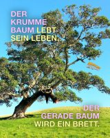 Der krumme Baum lebt sein Leben. Der gerade Baum wird ein Brett! - Geistesblitze