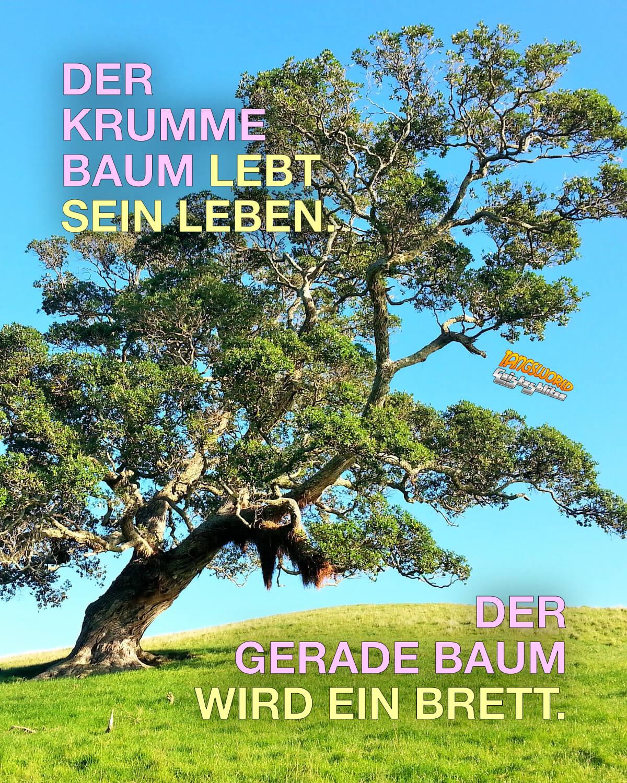 Der krumme Baum lebt sein Leben. Der gerade Baum wird ein Brett. - Geistesblitze