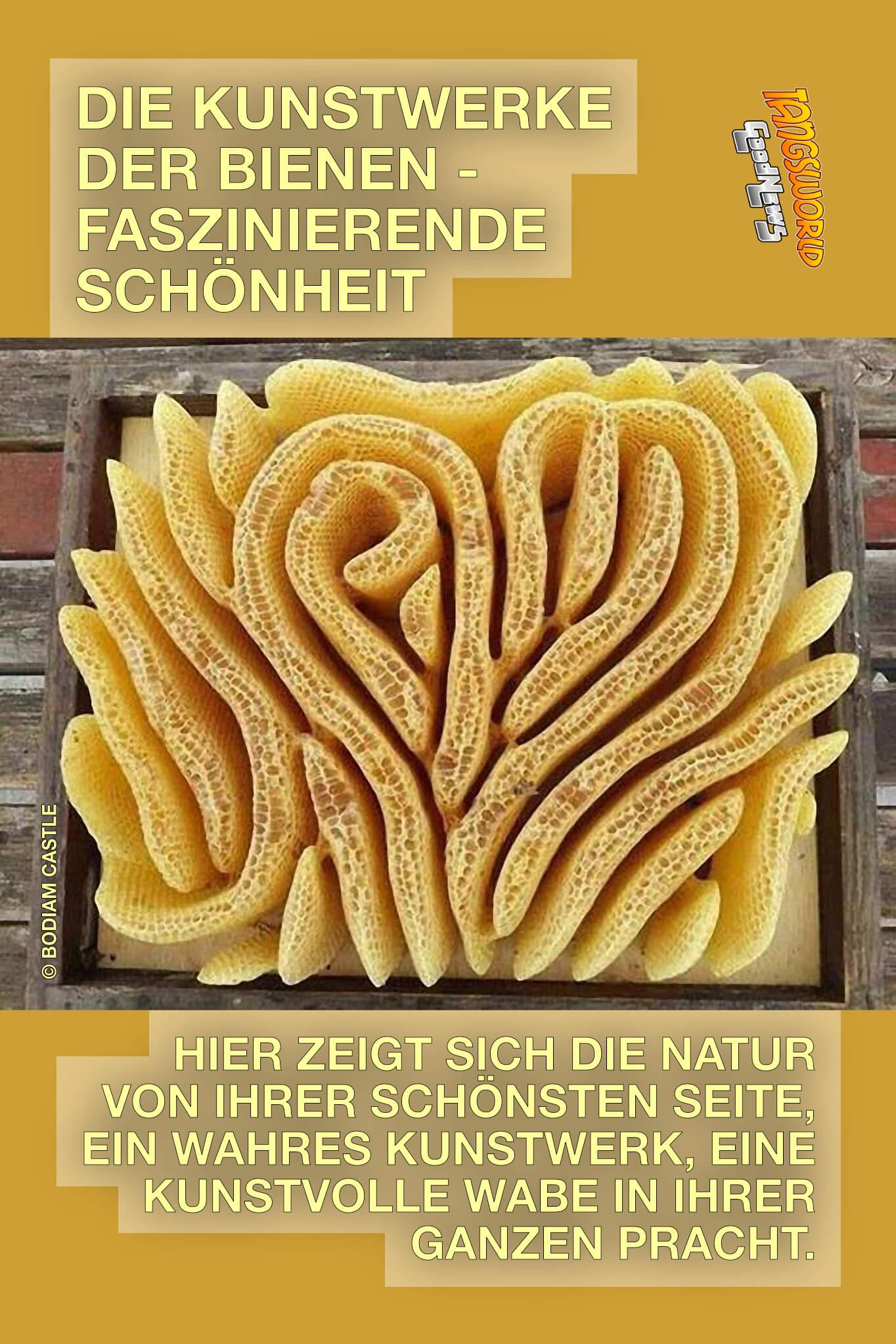 Die Waben-Kunstwerke der Bienen können absolut atemberaubend sein und dieses Herz-Labyrinth ist etwas ganz Besonderes. - GoodNews