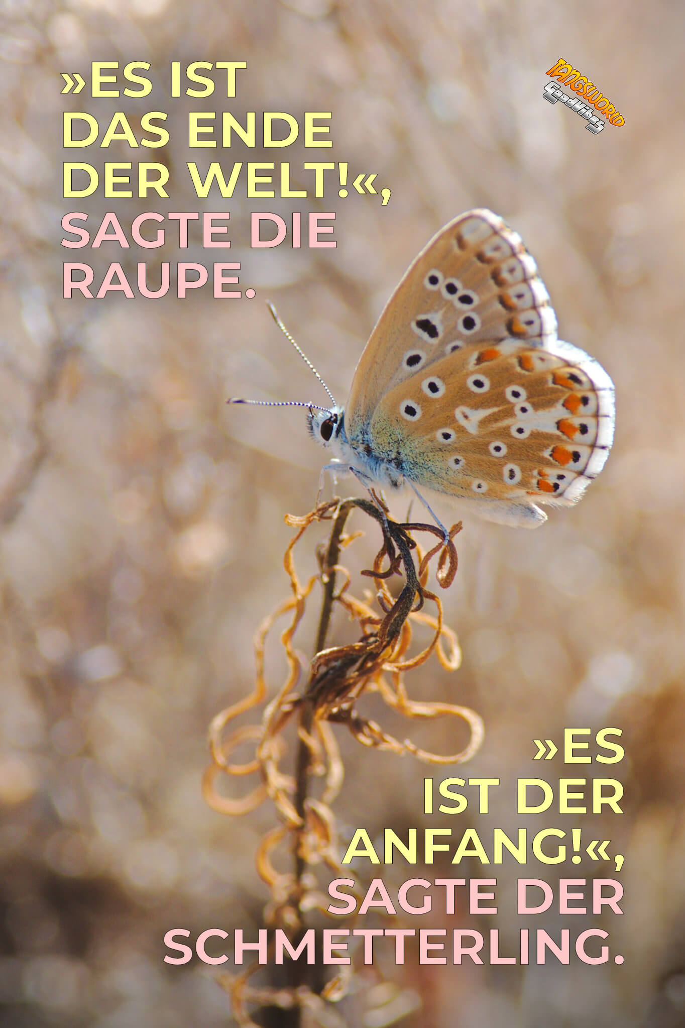 »Es ist das Ende der Welt!«, sagte die Raupe. »Es ist der Anfang!«, sagte der Schmetterling. - GoodVibes