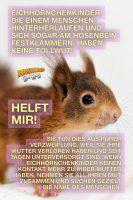 Hilfe für die Eichhörnchenkinder - GoodNews