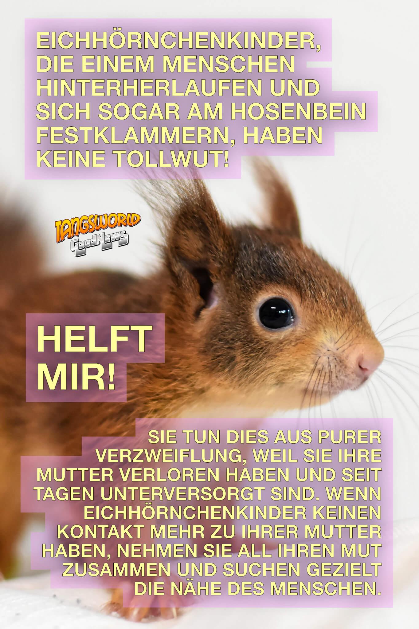 Hilfe für Eichhörnchenkinder. Was können wir tun, wenn wir beim Spaziergang möglicherweise verwaiste Eichhörnchen-Babys finden sollten? - GoodNews