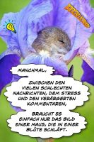 Manchmal - zwischen den vielen schlechten Nachrichten, dem Stress und den verärgerten Kommentaren - braucht es einfach nur das Bild einer Maus, die in einer Blüte schläft. - Geistesblitze