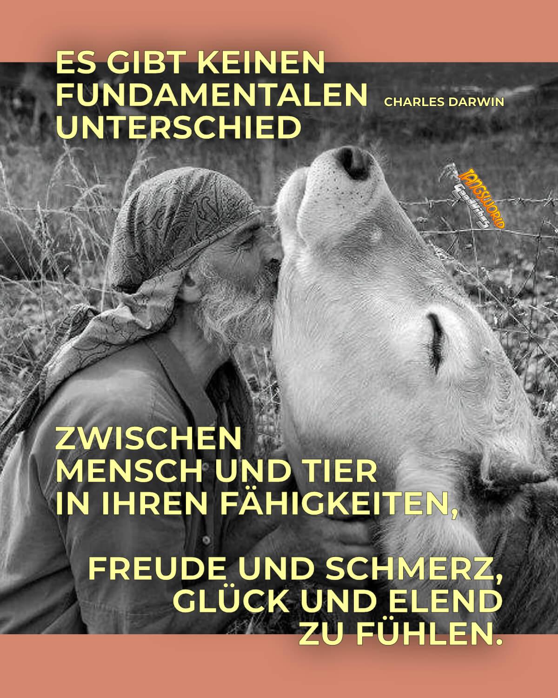 Es gibt keinen fundamentalen Unterschied zwischen Mensch und Tier in ihren Fähigkeiten, Freude und Schmerz, Glück und Elend zu fühlen. - GoodVibes   Charles Darwin