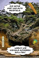 Die Natur gibt uns gute Beispiele, warum wir niemals aufgeben sollten! - Geistesblitze