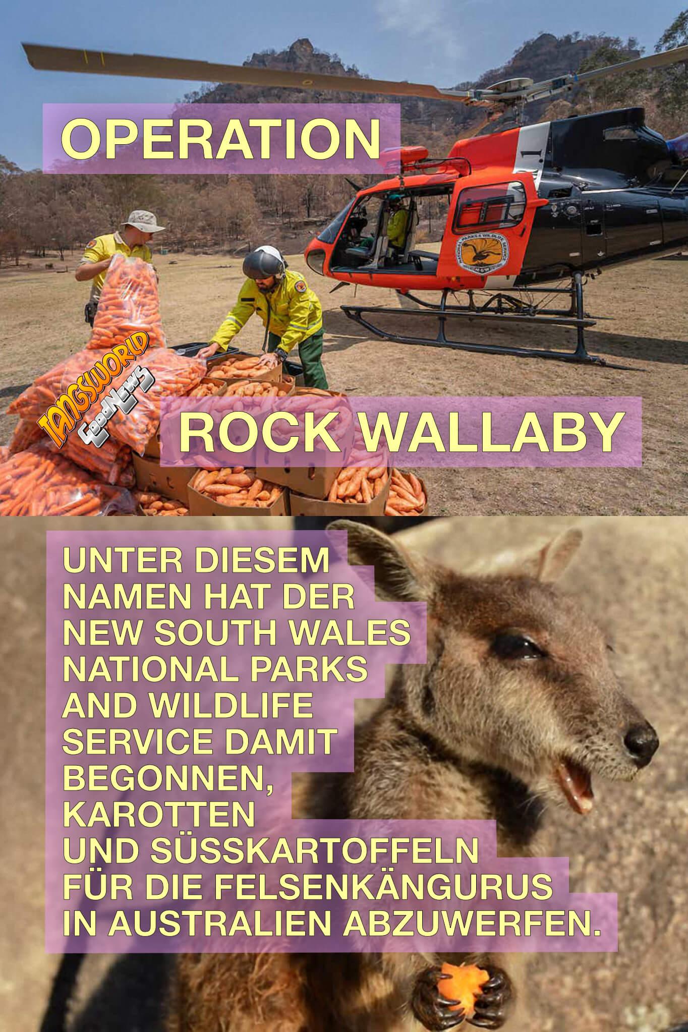 »Operation Rock Wallaby«. Unter diesem Namen hat der New South Wales National Parks and Wildlife Service damit begonnen, Karotten und Süßkartoffeln für die Felsenkängurus in Australien abzuwerfen. - GoodNews