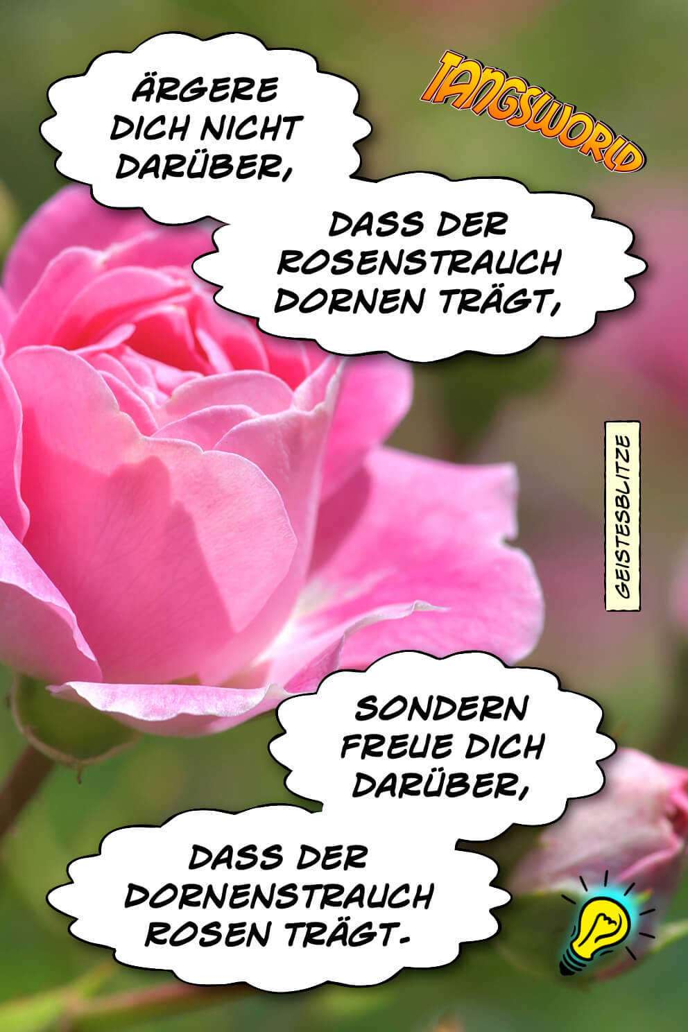 Ärgere dich nicht darüber, dass der Rosenstrauch Dornen trägt, sondern freue dich darüber, dass der Dornenstrauch Rosen trägt. - Geistesblitze