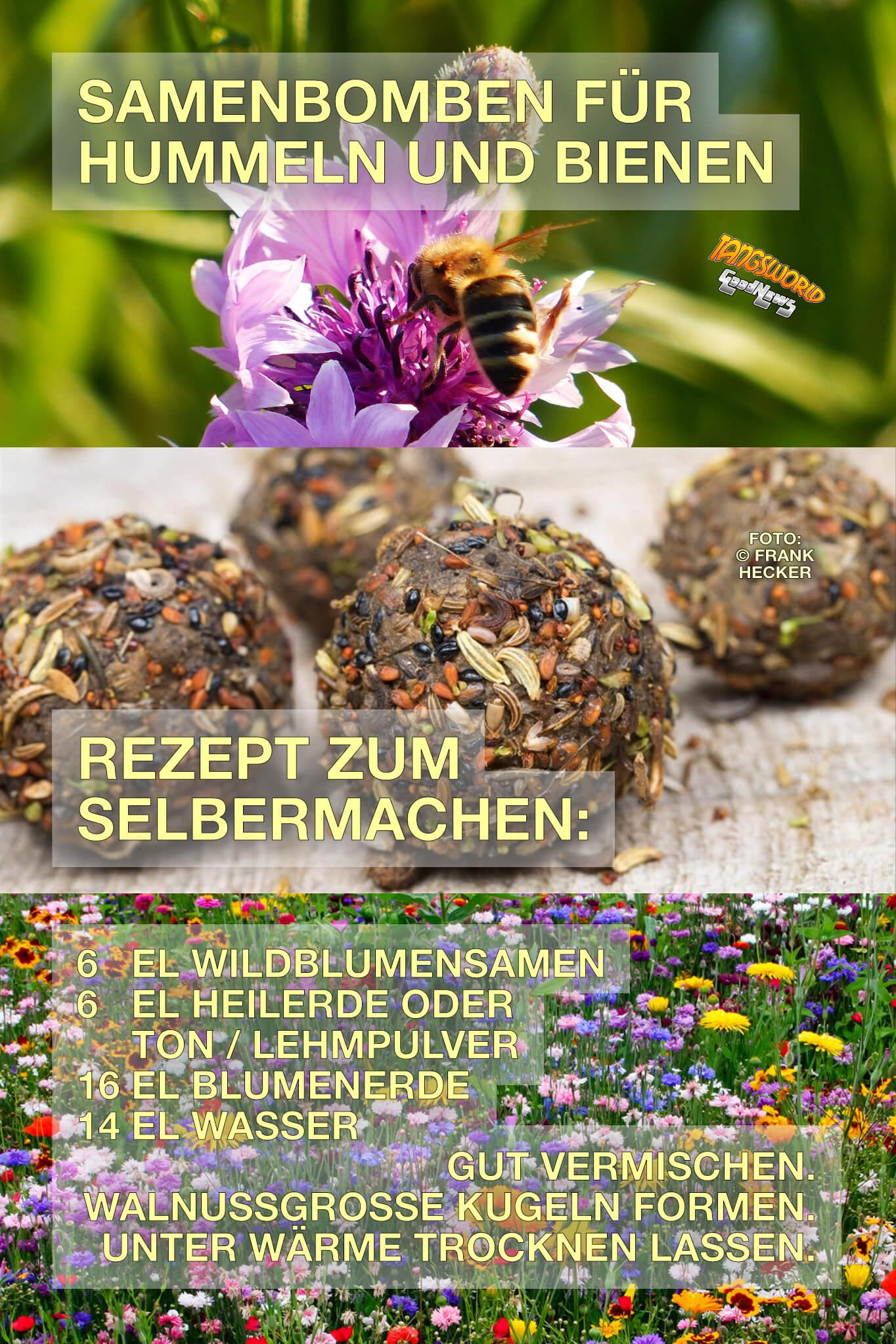 Samenbomben für Hummeln und Bienen - Rezept zum Selbermachen und mehr. - GoodNews