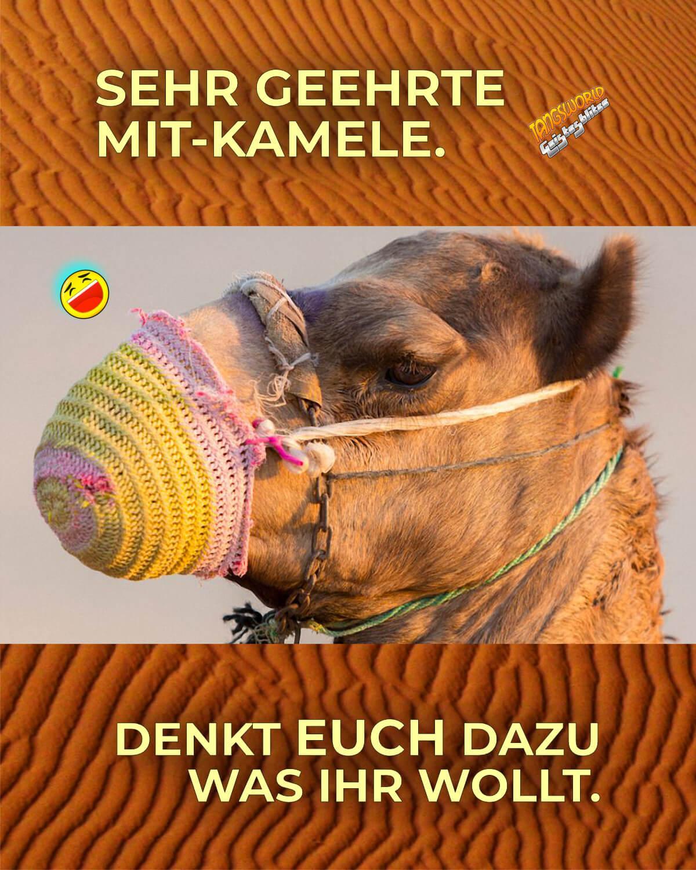 Sehr geehrte Mit-Kamele. Denkt euch dazu was ihr woll! - Geistes(bl)witze