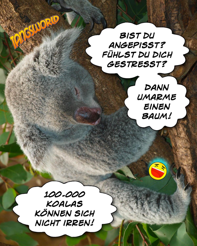Bist du angepisst? Fühlst du dich gestresst? Dann umarme einen Baum! 100.000 Koalas können sich nicht irren! - Geistes(bl)witze