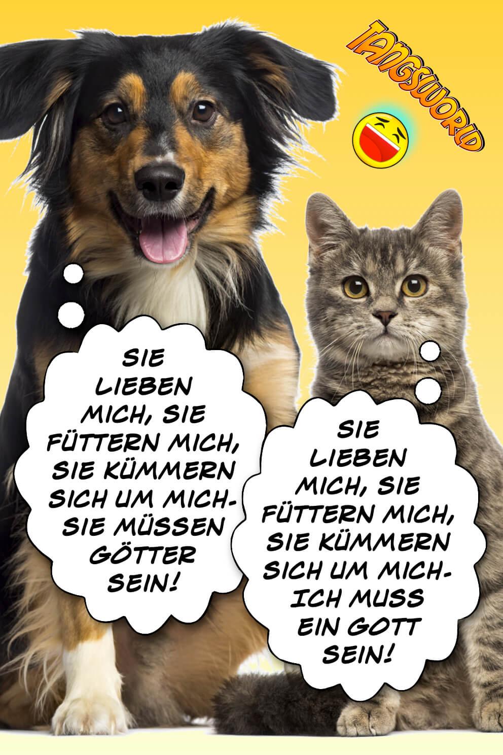 """Der Hund denkt: """"Sie lieben mich, sie füttern mich, sie kümmern sich um mich - sie müssen Götter sein!"""" Die Katze denkt: """"Sie lieben mich, sie füttern mich, sie kümmern sich um mich - Ich muss ein Gott sein!"""" - Geistes(bl)witze"""