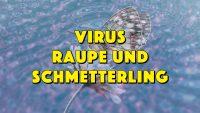 Virus Raupe und Schmetterling - Geistesblitze Movie