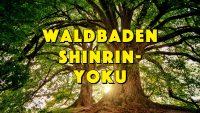 Ein »Bad« im Wald senkt den Blutdruck, regulierte den Puls und reduziert auf natürliche Weise Stresshormone. Waldbaden - »Shinrin-Yoku« - Geistesblitze Movie